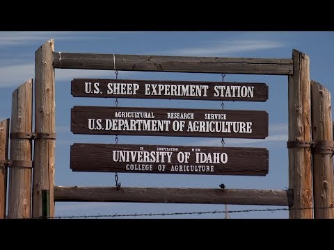 U.S. Sheep Experiment Station's Important Role for Entire Industry