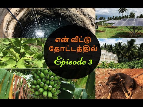 En veetu thottatil / Farmland in theni/ Home garden