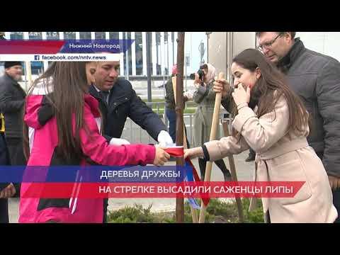 Деревья дружбы появились на Стрелке в Нижнем Новгороде