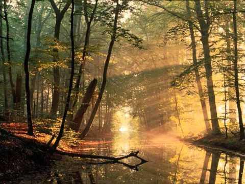 Follando a una prostituta impresionante en el bosque -