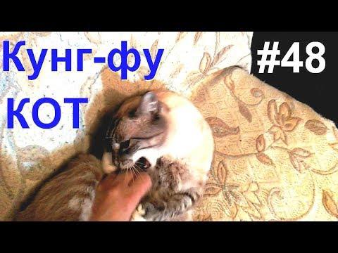 кошками юмор с