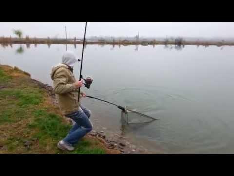 карп фишер рыбная ловля  видео