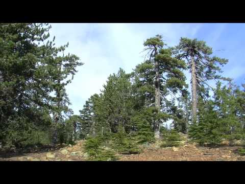 Multifunctional forestry in Cyprus