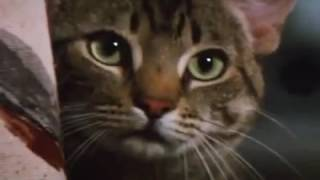 Кошачий глаз / Cat s Eye 1985 трейлер