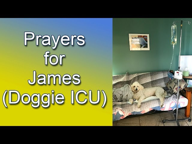 Prayers for James