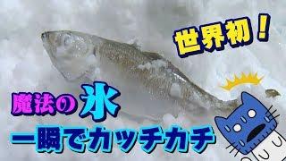 生きた魚があっという間にカッチカチ!世界初の氷って!?【マスクにゃんニュース】