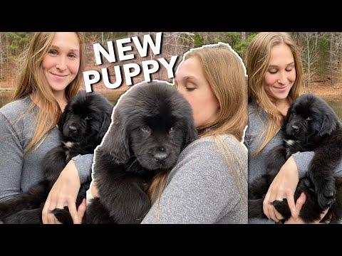 I GOT A PUPPY!! | Getting My Dream Dog VLOG