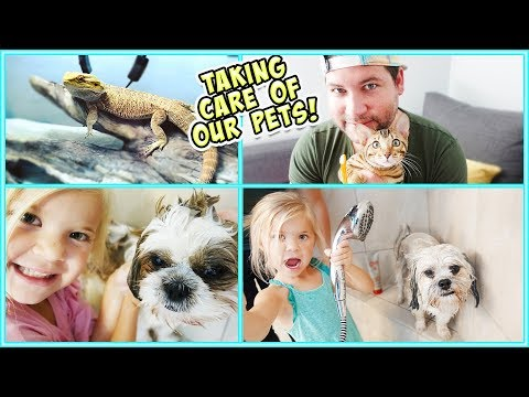 24 HOURS WITH OUR PETS!!