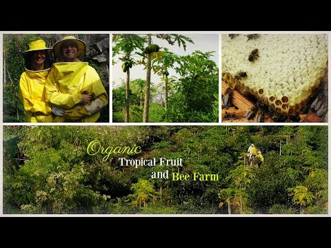 Organic Tropical Fruit and Bee Farm in Tenerife - Up Close Magic of Bees!