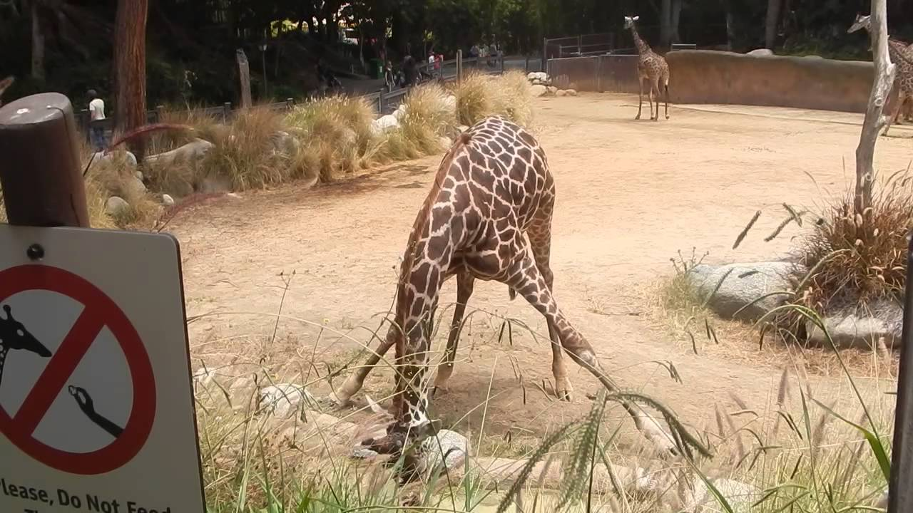 Atention Bad conditions in Los Angeles Zoo for the Animals - YouTube