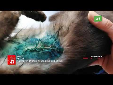 Котенка закрутило в двигателе авто Израненного животное нашли дети возле одного из домов Челябинска