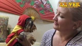 Щенок йоркширского терьера - Ромашка, XX Vek
