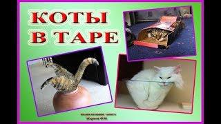 Коты в таре