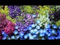 Miniature de la vidéo de la chanson Felicidade