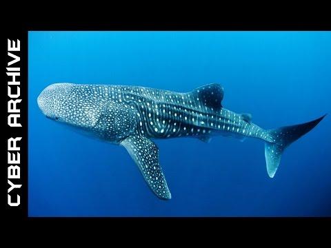 15 Biggest Animals in the World
