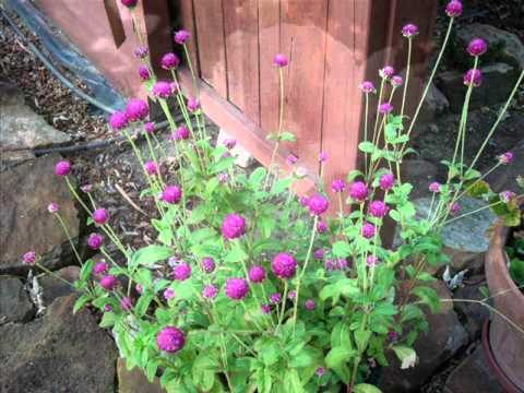 Dottie's Garden
