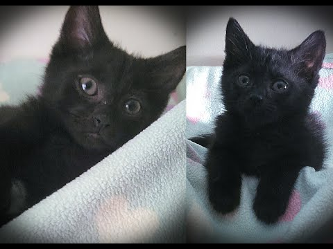 Black cats really do have bad luck being adopted