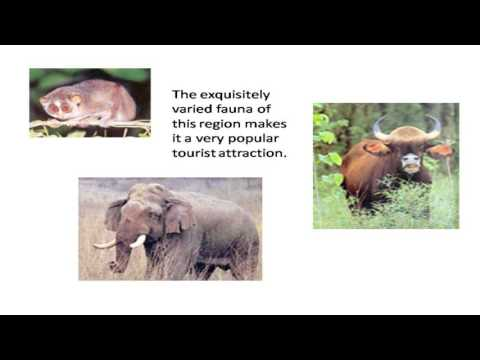 Nilgiri Biosphere Reserve Ppt