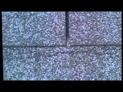 Elevate Roofing Show Wind Damage To Shingles Denton Texas