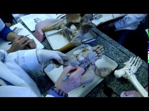 Гиалуроновая кислота в коленный сустав, внутрисуставное