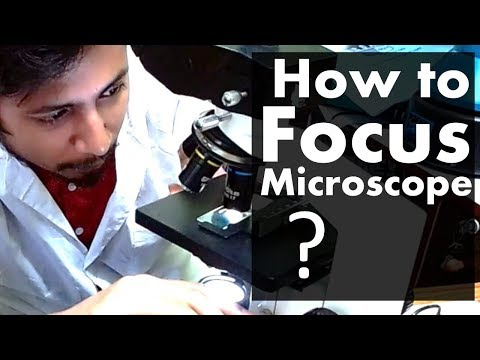 How To Focus A Microscope | The Best Microscope Focusing Procedure Steps