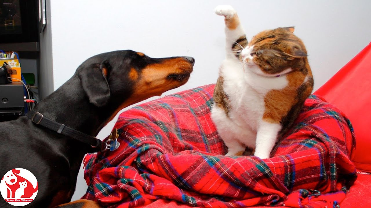 Cats and Dogs 😸 Top Funny Cat Videos of The Week 💗 Funny Cat Moments 🐱 Funny Pets Moments 😂 Cats #15