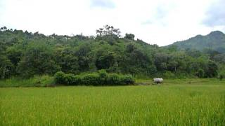 Sri Lanka,ශ්රී ලංකා,Ceylon,Beautiful Valley with Rice Fields