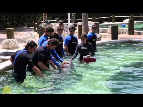 Miami 2014 Dolphin Visit