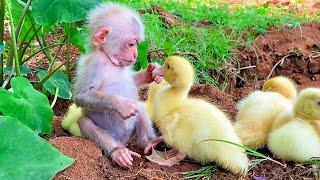 Animals ADOPTING Other Animal Species
