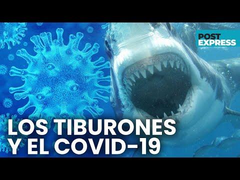 La vacuna contra el COVID-19 podría matar a medio millón de tiburones | Post Express