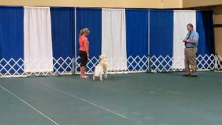 Akc Novice Obedience Trial: Off-leash Heeling Exercise