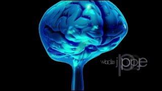 Neuroanatomy: The Cerebrospinal Fluid CSF