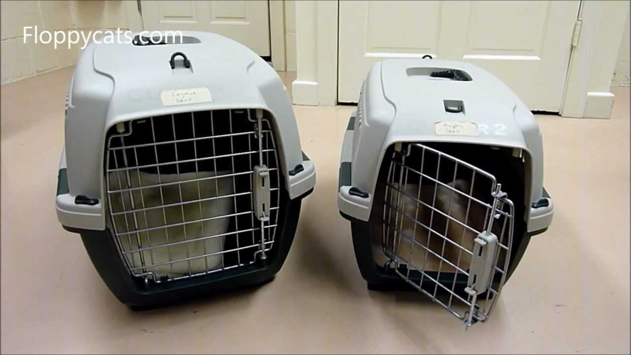 c8f633f779 Marchioro Clipper Cayman Pet Carrier Review - ねこ - ラグドール ...
