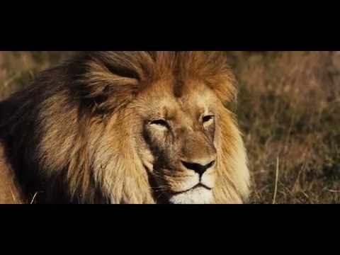 CISaustralia - Big 5 Wildlife Management and Conservation in South Africa - Volunteer Abroad