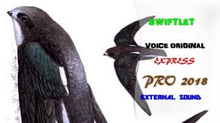 DOWNLOAD SWIFTLET PRO VOICE  EXCLUSIVE 60 MINUTES | ORIGINAL HQ Swiftlet Pro 2018