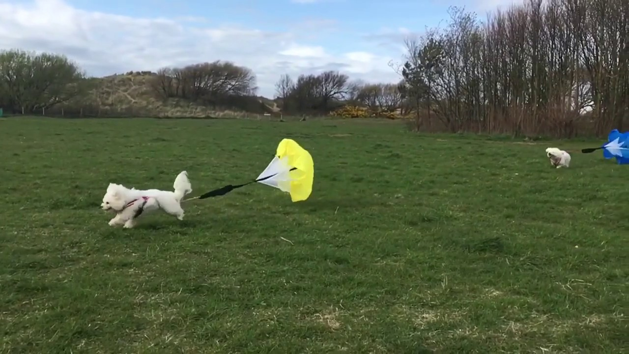 Parachute Resistance Training For Dogs