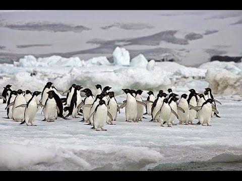 Antarctic Wildlife Adventures - National Geographic