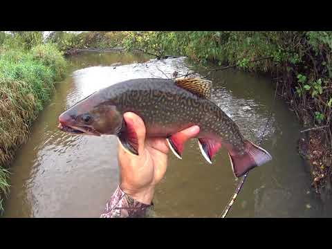 Wisconsin Trout Fishing 10/5/2017