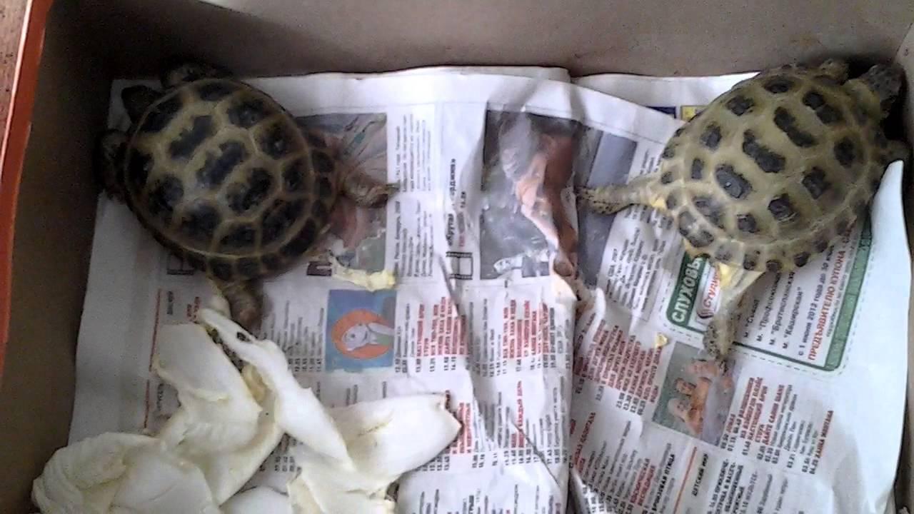 уход за черепахой - YouTube