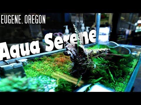 Aquarium Store Tour 2019 Aqua Serene, Oregon
