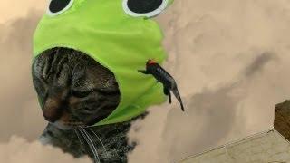 進撃のねこ OPパロディver Jumping cat play 「Attack on titan」(Shingeki no kyojin)