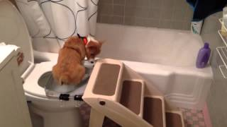Dog Tales: Potty Trained Puppy Uses The Toilet