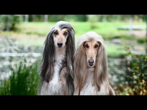 Euro Dog Show 2018. Jak wygląda najpiękniejszy pies w Europie?