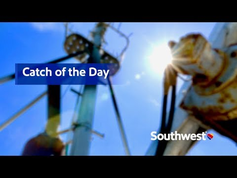 Southwest Cargo Ships Fresh Fish All Across The U.S. | Southwest Airlines