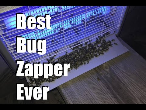The Best Bug Zapper! - Ohuhu Bug Zapper Review
