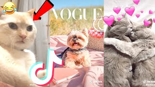 August 2020 Funny Cute Tik Tok Animals Compilation(Pt.4)