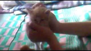 Котенок Майа.mp4