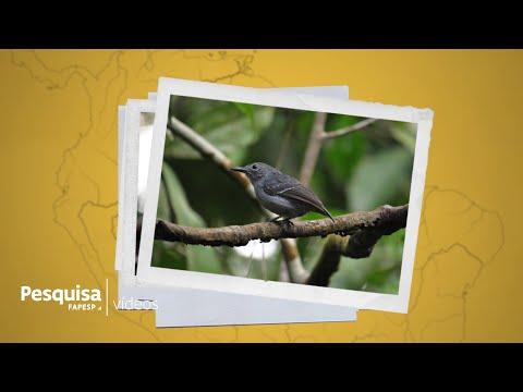 como-rios-e-várzeas-influenciam-a-formação-de-espécies-na-amazônia?