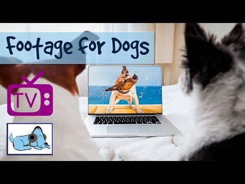 TV for Dogs, Nature Footage for Dogs - A Film for Dogs - Relaxation Footage for Dogs with Dog Music