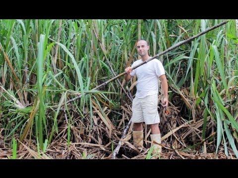 Homemade sugar cane juicer